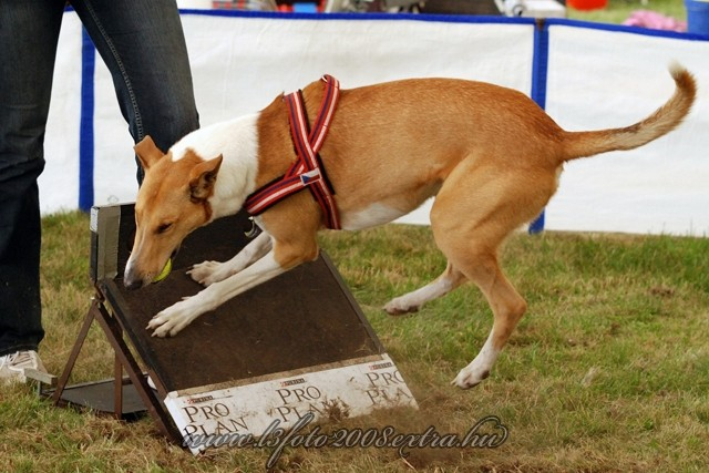 Jim a flyball