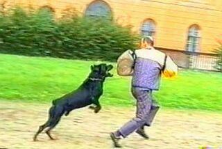 Hladké zadržení na Policejním přeboru v Dobroticích 2001