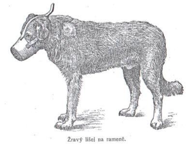 Řídká srst u psa
