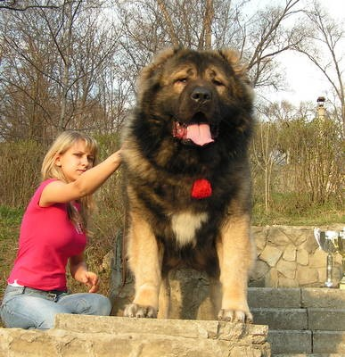 Dog Breeds That Can Kill Bears